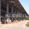 Milking It