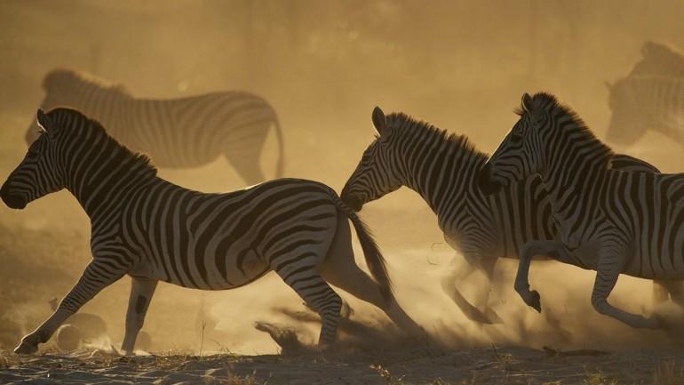 Wild Kalahari