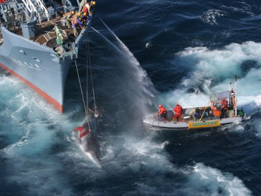 Greenpeace Contact Number and Email Address