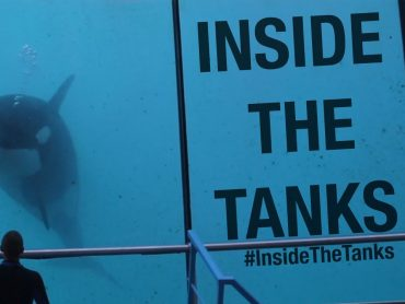 Inside The Tanks