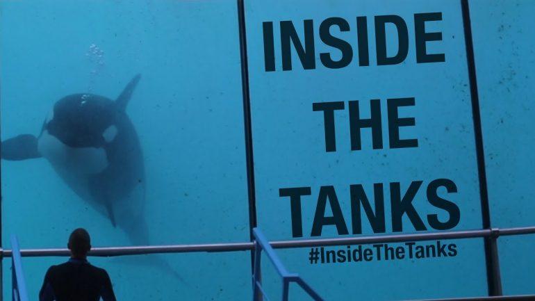Inside The Tanks