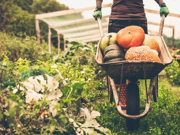 Organic food: Hype or Hope?
