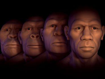 The Human History