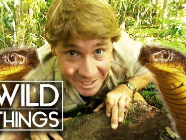 Steve Irwin: The Ten Deadliest Snakes In The World