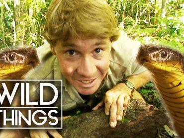 Steve Irwin: The Ten Deadliest Snakes In The World