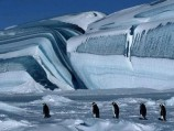 March of the Penguins (2006)