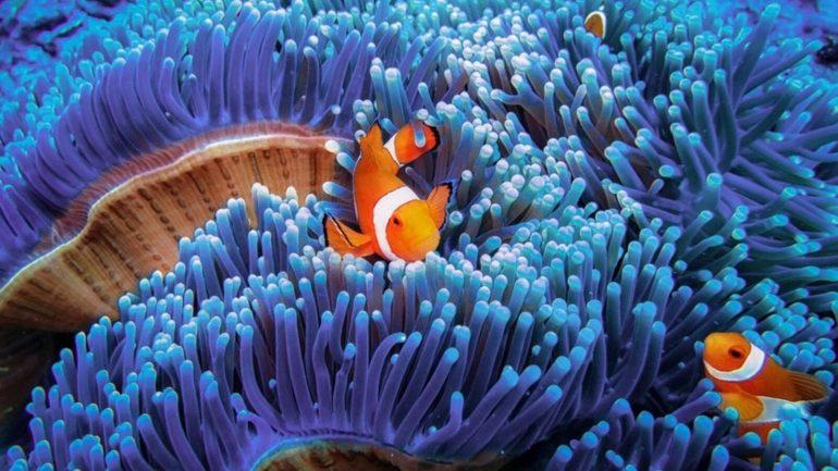 Alien Reefs