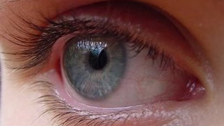 Touch and Vision: The Human Senses