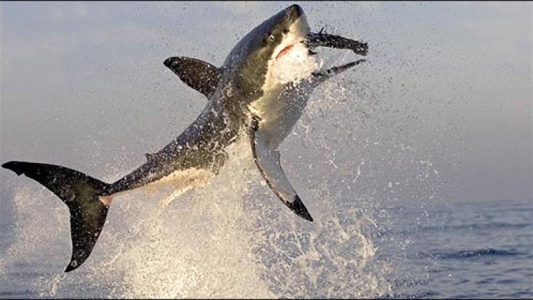 Predators: The Ultimate Killing Machines
