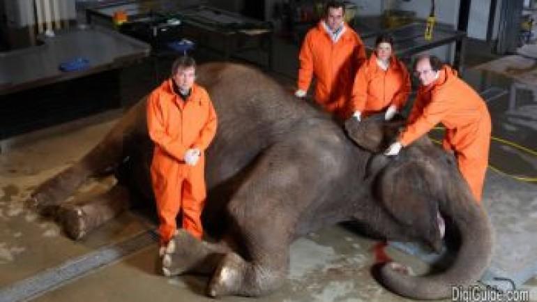 The Elephant: Inside Nature's Giants