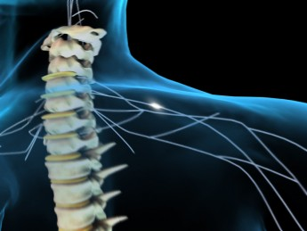 Plan of Action: How the Spinal Cord Controls Movement
