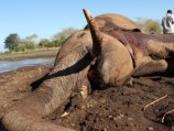 The Elephant: Life after Death