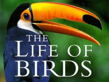 The Life of Birds: To Fly or Not to Fly