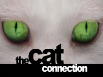 The Cat Connection