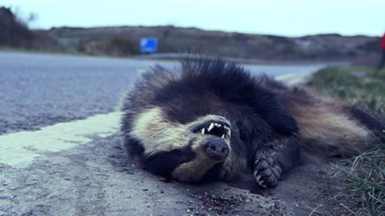 The Man Who Eats Roadkill