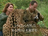 Jaguars Born Free