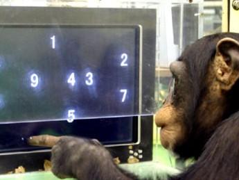 Super Smart Animals