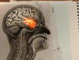 The Creative Brain How Insight Works