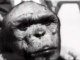 Stalin's Ape Man