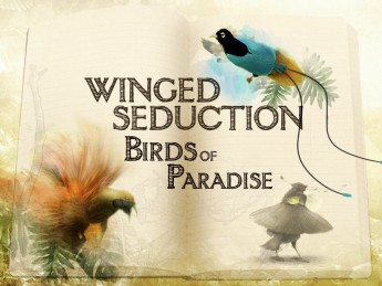 Winged Seduction: Birds Of Paradise