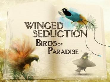 Winged Seduction: Birds Of Paradise