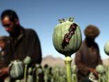 Blood, Smack Tears Afghanistan's Heroin Hell