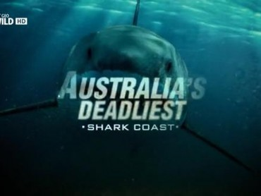 Australia's Deadliest: Shark Coast