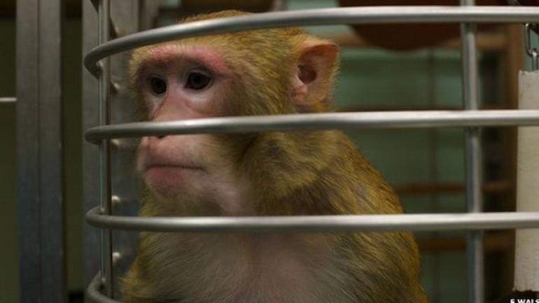 Inside The Monkey Lab
